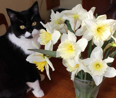 Arwen and daffs