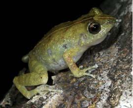 Frog_on_tree_f1