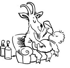 Goat feeding baby
