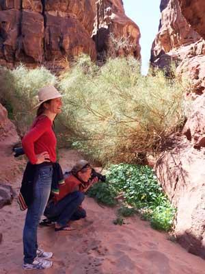 Ravine bushes - Yolanda an copy