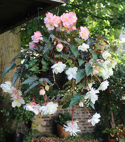 White Hanging basket