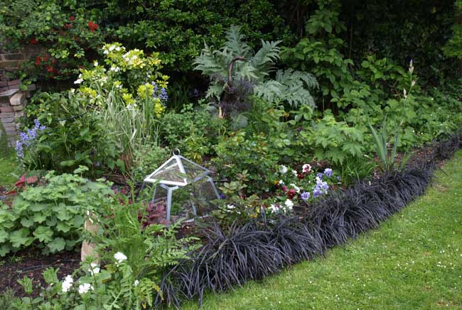 Herbaceous patch
