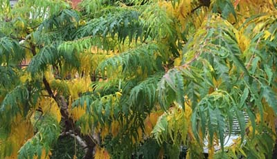 leaves green yellow