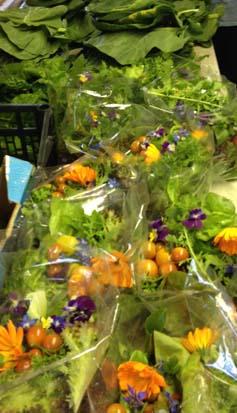 salad bags rossinver